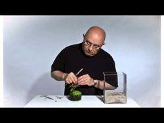 Wabi-Kusa Tutorial: Cube by James Findley