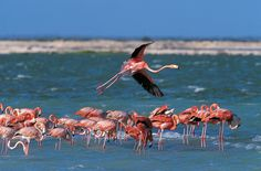 Bonaire Dutch Antilles, Caribbean - for the flamingos (gasp!) diving and snorkeling.