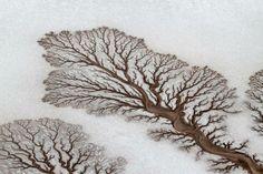 Foto e legenda de Ryan Essex / National Geographic.  Eu tirei esta foto quando olhava a costa de Baja California, no México. O momento que os rios encontram o deserto parece uma árvore.