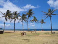 Palm trees, trade winds, clouds and sun. What a perfect day at the beach on Kauai. This was our lunch break. Not bad, yah?
