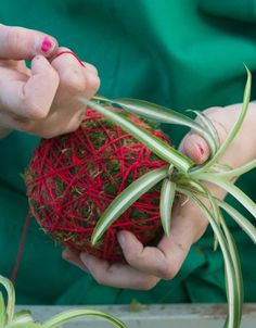 DIY kokedama: how to make a Japanese hanging plant? Garden Art, Garden Plants, Balcony Garden, Ideas Bandana, Container Gardening, Gardening Tips, String Garden, Wie Macht Man, Small Apartment Decorating