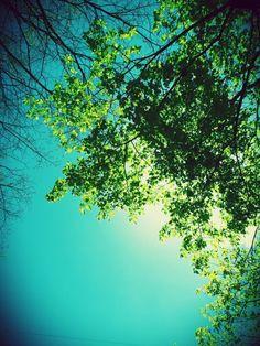Blue & Green ☆☆☆ 1 Mayıs 2015 (Tunceli/Turkey)