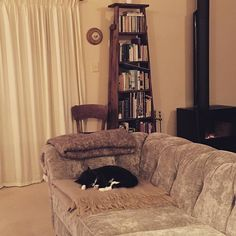 If only all cats were so lucky. Jessica is asleep by the fire and Nina has made herself comfortable on the mohair rug with the alpaca rug close to paw just in case the mohair isn't lofty enough buy itself  #princessandthepea #tuxedocats #rescuecats #fridaynightathome #luckylife #rainyoutside #socozy #auckland #newzealand #winterevening
