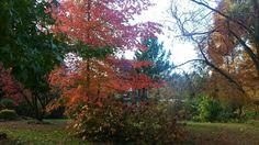 Autumn colours at Bright, Victoria Autumn Colours, Victoria, Bright, Nature, Plants, Color, Bonito, Naturaleza, Colour