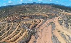 Drone Captures Shocking Footage of Rainforest Destruction Caused by Palm Oil (VIDEO)