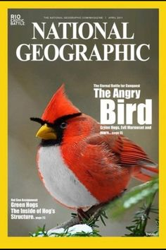 Angry bird :))