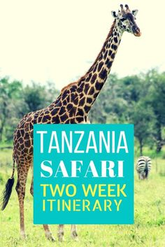 Going on a safari in Tanzania (home to Kiliminjaro, The Serengeti, & Ngorongoro Crater) is a once in a lifetime journey, check out my itinerary here! Africa Destinations, Travel Destinations, Stone Town, Tanzania Safari, Viewing Wildlife, Alaska Travel, Alaska Cruise, African Safari, East Africa