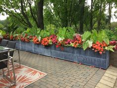 Waiting to plant seasonal containers until the soil and night temperatures warm up in our zone is an idea of considerable merit. For those of you that read this journal regularly, you already know … Container Flowers, Container Plants, Container Gardening, Tropical Fruits, Tropical Plants, Begonia, Garden Design Magazine, Deck Planters, Garden Works