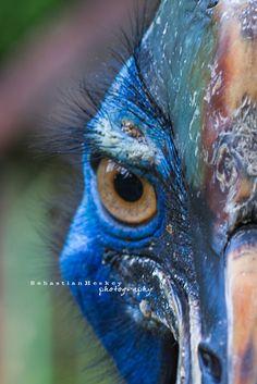 """Neytiri, Avatar"" - Cassowary Bird"