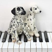 Needle felted Dalmatian puppies on piano keys