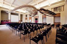Inspiring meeting room - Darwin room at Antwerp Zoo (zalenvandezoo.be)
