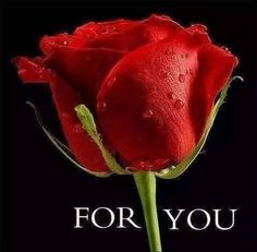 Roses are most popular flower in the world. Red roses are the symbol of love and romance. Just have a look romantic red roses pictures. Most Popular Flowers, Amazing Flowers, Beautiful Roses, Beautiful Flowers, Romantic Roses, Exotic Flowers, Beautiful Gardens, Red Rose Pictures, 3d Rose