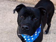 TO BE DESTROYED SUNDAY, 3/16/14  Brooklyn Center - P   My name is JAKE a/k/a SNICKERS. My Animal ID # is A0980789.  I am a neutered male black pit bull mix. The shelter thinks I am about 1 YEAR 5 MONTHS old.   I came in the shelter as a OWNER SUR on 03/04/2014