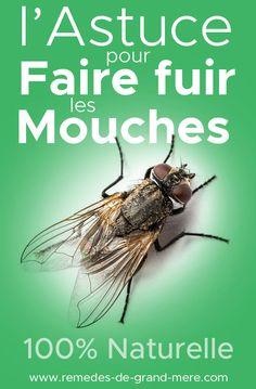 13 Astuces Anti-Mouche Naturels et Efficaces | Maison | Remèdes de Grand-Mère Clean House, Diy Beauty, Life Hacks, Insects, Cleaning, Blog, Garden, Ideas, Motorbikes
