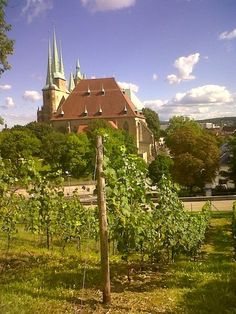 A handkerchief vineyard looking towards the Erfurt Cathedral