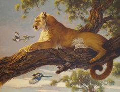 "animal artists | Ezra Tucker, ""Magpie Summer"" (Rocky Mountain NationalPark, CO)"