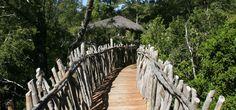 Tree lodge, Nidos de Pucon