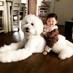 超巨大プードルこと、スタンダードプードルと赤ちゃんの写真をアップする たまねぎさんのインスタグラムが話題です。
