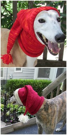 You Will Love This Collection Of Cute Dog Hat Patterns Knitting Patterns For Dogs, Designer Knitting Patterns, Baby Hat Knitting Pattern, Dog Pattern, Crochet Patterns, Pattern Ideas, Hat Patterns, Crochet Dog Clothes, Crochet Dog Sweater