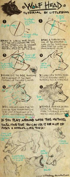 Wolf Head- TUTORIAL by on DeviantArt The easiest way to draw an amazing wolf head from many different angles. >>> If you liked this, then check out my Human Head Tutorial: REQUEST TUTORIALS! Drawing Lessons, Drawing Techniques, Drawing Tips, Drawing Reference, Drawing Sketches, Cool Drawings, Drawing Ideas, Drawing Stuff, Drawing Skills