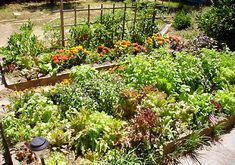 Picture of a Raised Garden Bed, Permaculture - Sustainable Living
