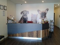 Image result for veterinary clinic reception design