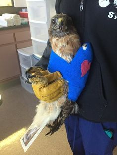 Woman find injured Hawk in her yard and Saves his Life! For animal people. Pass it on.