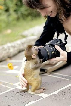 Hehe !! This cute little baby monkey wants to become a photographer. Please give him a camera. :)