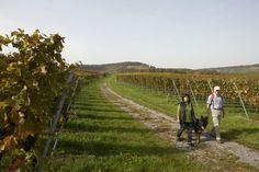 Wanderung durch die Weinberge