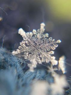 The Beauty of a Single Snowflake