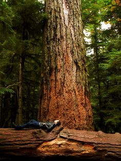 Cedar Tree at Cathedral Grove, Vancouver Island, British Columbia, Canada by Joshua Jackson Vancouver Island, Canada Vancouver, Ontario, Zen Meditation, Quebec, Montana, Photos Of The Week, Canada Travel, British Columbia