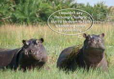 Just regular hungry hippos.