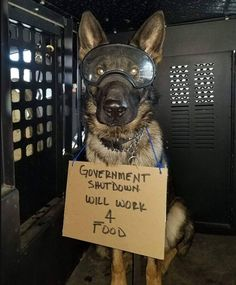 Wicked Training Your German Shepherd Dog Ideas. Mind Blowing Training Your German Shepherd Dog Ideas. Military Working Dogs, Military Dogs, Police Dogs, Police Humor, Military Wife, Animals And Pets, Funny Animals, Cute Animals, I Love Dogs