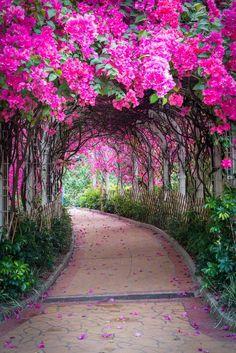 Un Chau Estate Flower Tunnel