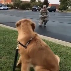 Adorable video of army soldier and dog's friendship