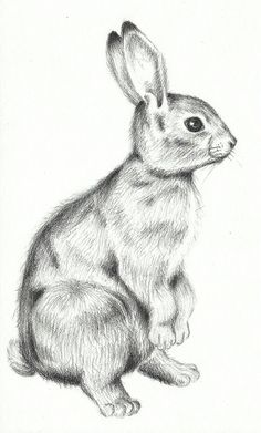 bunny pillows | Go Back > Gallery For > Standing Rabbit Sketch