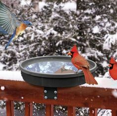 Deck-Mount Heated Bird Bath is ideal for year-round use and prime views from inside the home. Entice feathered friends for great close up viewing, right on your deck, all year long! The Songbird Spa i