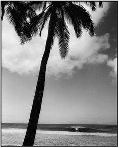 expo: he'e nalu en two thirds Beach Bum, Summer Beach, Nalu, Ocean Waves, Print Pictures, Palm Trees, Surfing, Paradise, Sea