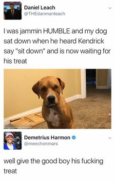 Have you laughed today? Get your laugh on to these hilarious funny pictures! Funny Animal Memes, Dog Memes, Cute Funny Animals, Funny Cute, The Funny, Funny Dogs, Cute Baby Animals, Cute Dogs, Funny Memes