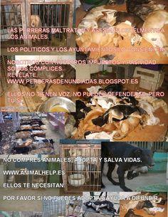 Contra el maltrato y abandono al podenco, contra la venta y cria de cachorros de perros podencos en Tarragona