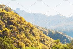 View of the valley with yellow trees and peaks. Colorful scene of the autumn season. Colorful Mountains, Yellow Tree, Mountain Landscape, Fall Season, Scene, Seasons, Autumn, Travel, Life