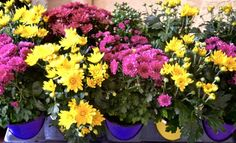 Get Your Yard Fall Ready...10 Great Tips - 719woman.com Fall Plants, Autumn Garden, Home And Garden