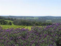 Winery vista, Denmark WA