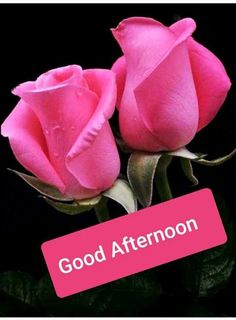 Images Of Good Afternoon - Good Morning Images, Quotes, Wishes, Messages, greetings & eCards Gud Afternoon Images, Afternoon Messages, Good Morning Friday Images, Good Evening Messages, Good Morning Thursday, Good Afternoon Quotes, Good Morning Gif, Good Morning Flowers, Good Morning Greetings