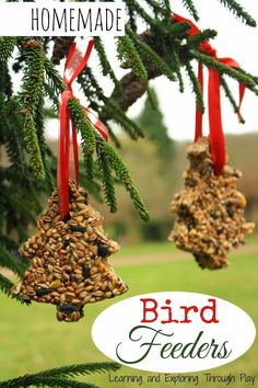 Home made Bird seed feeders. Caring for wildlife. Winter activities for children.