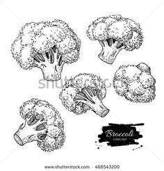 Broccoli hand drawn illustrations. Vegetable engraved style objects. Isolated Broccoli set. Detailed vegetarian food drawing. Farm market product.