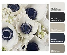 How to Pick a Color Palette for your Entire Home