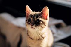 eeeeeee. so cute.