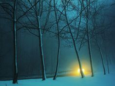 lights in the winter dark