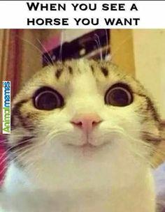 Cat memes Desirable moments...